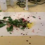 Rozbité ruže